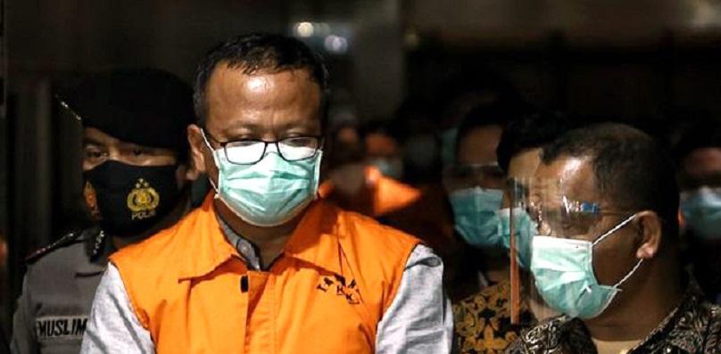 Menterinya Diciduk KPK, KKP Hentikan Sementara Penerbitan Surat Penetapan Ekspor Benih Lobster